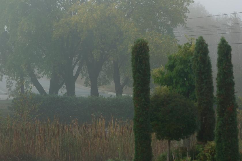 blog photo 21 fog.JPG