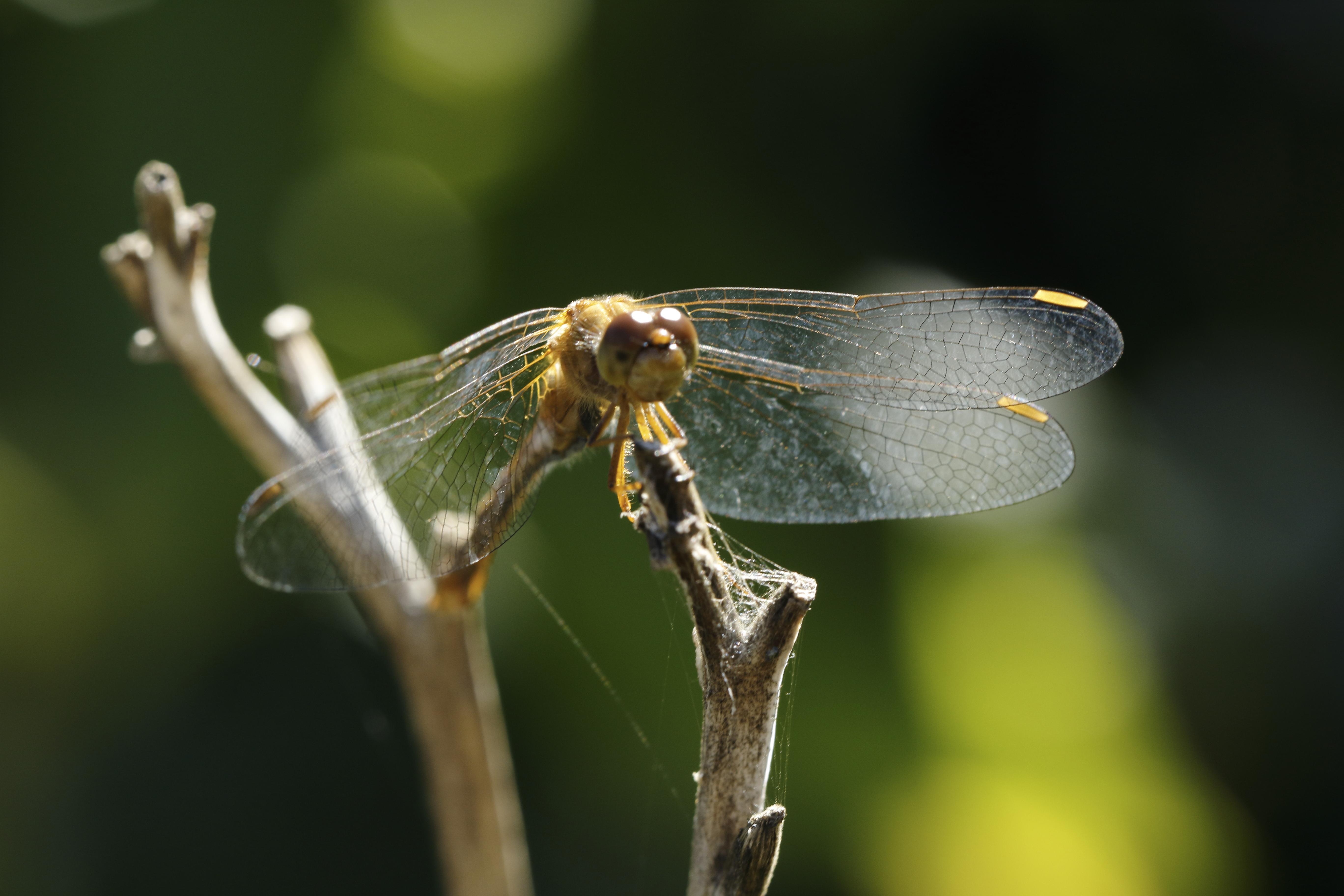 blog photo 29 the dragonfly.JPG