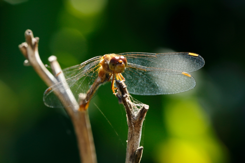 blog photo 29 the dragonfly.JPG