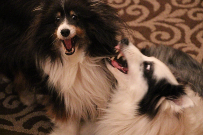 blog photo 31a dog fight.jpg