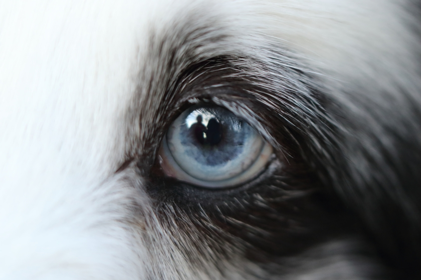 blog photo 57 dog's eye.JPG
