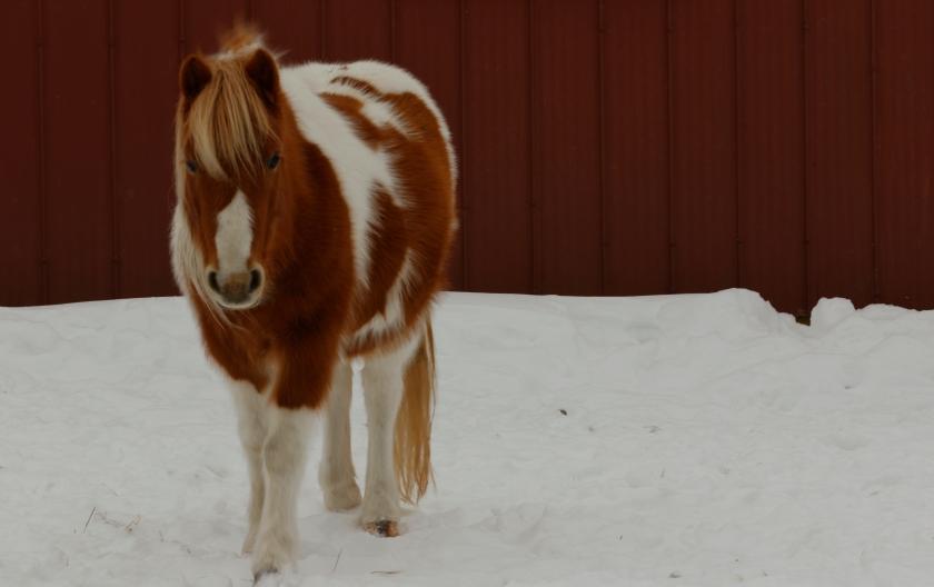 blog photo 59 horse
