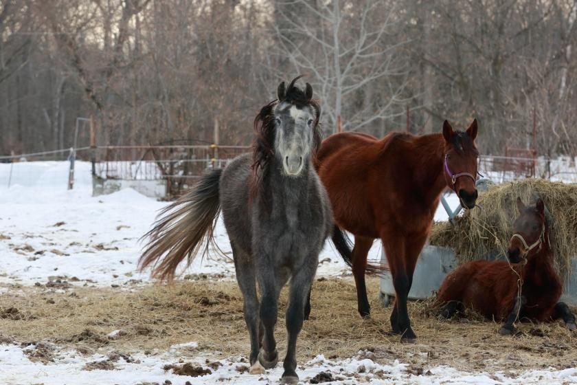 blog photo 70 grey horse