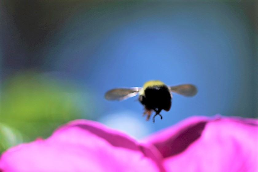 blog-photo-71-behind-bee