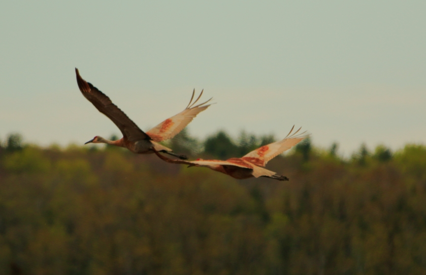 blog photo 90 flying cranes