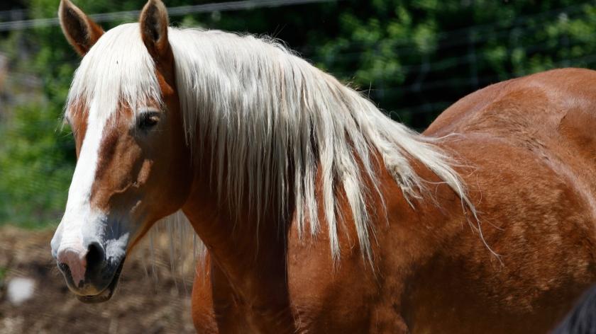 blog photo 94 Horse