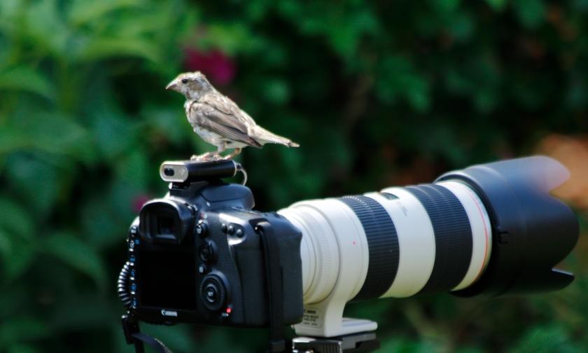 blog photo 113 Bird on Camera