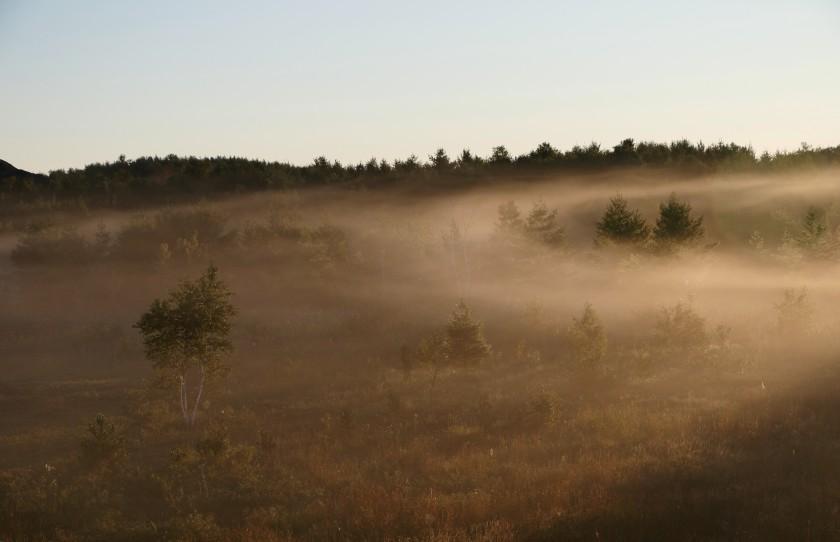 blog photo 118 fog (2)