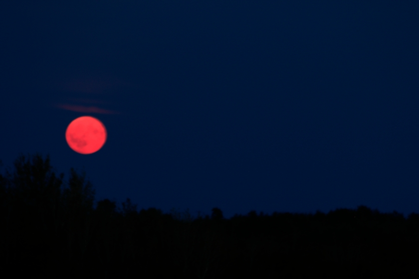 blog photo 138 red moon
