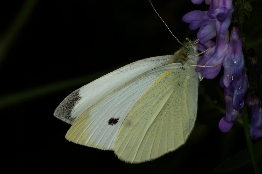 blog photo 155 moth
