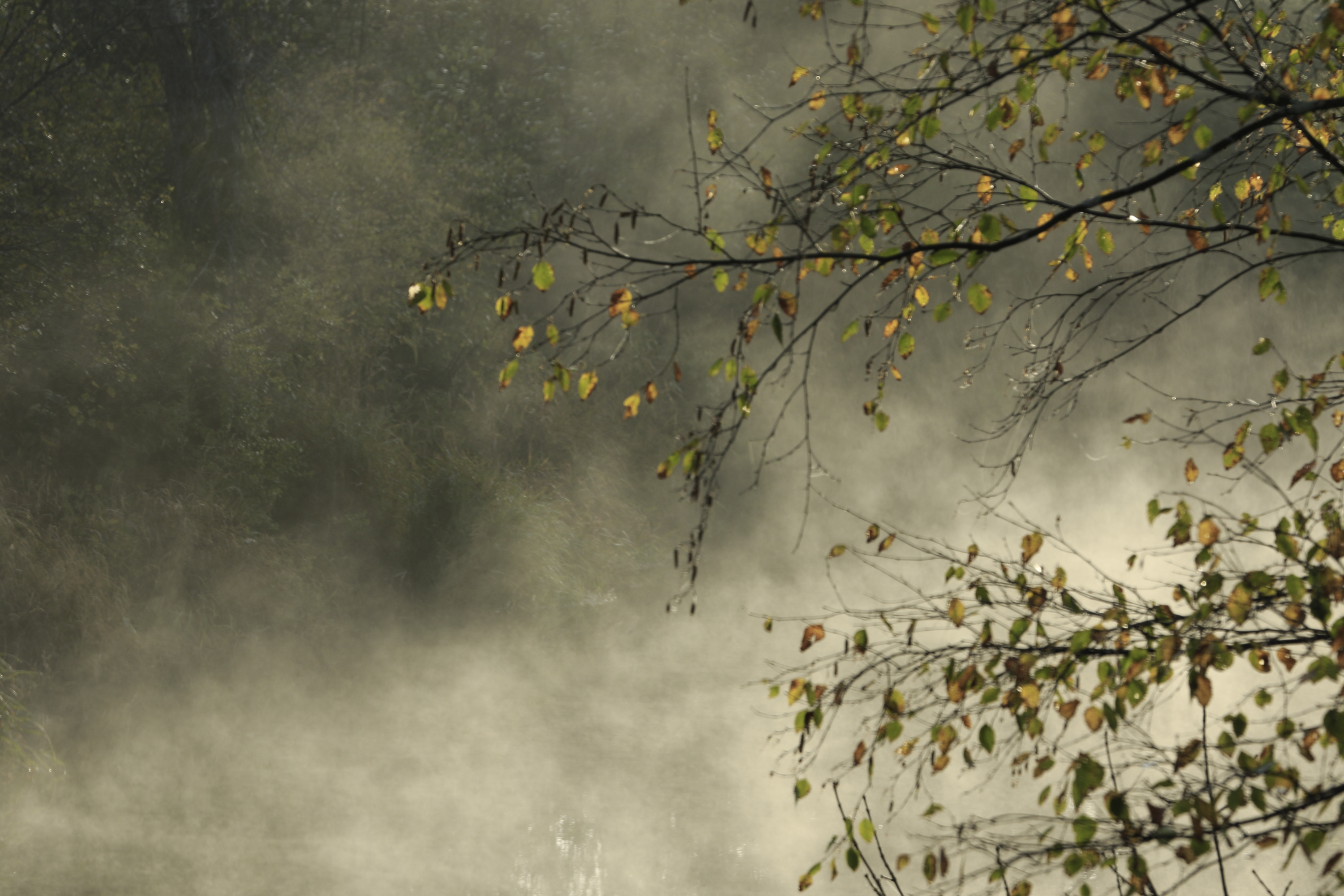 blogphoto159tree-mist