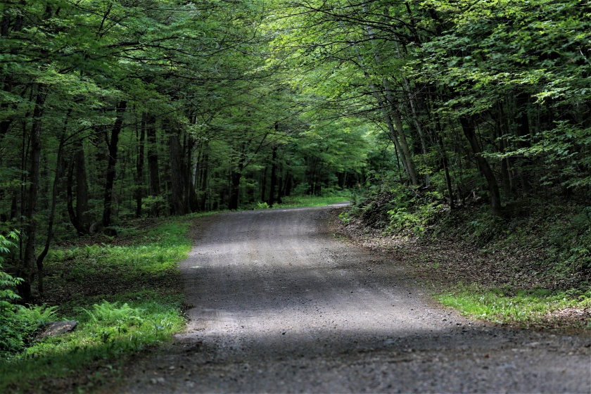 blog photo 168 forest & road