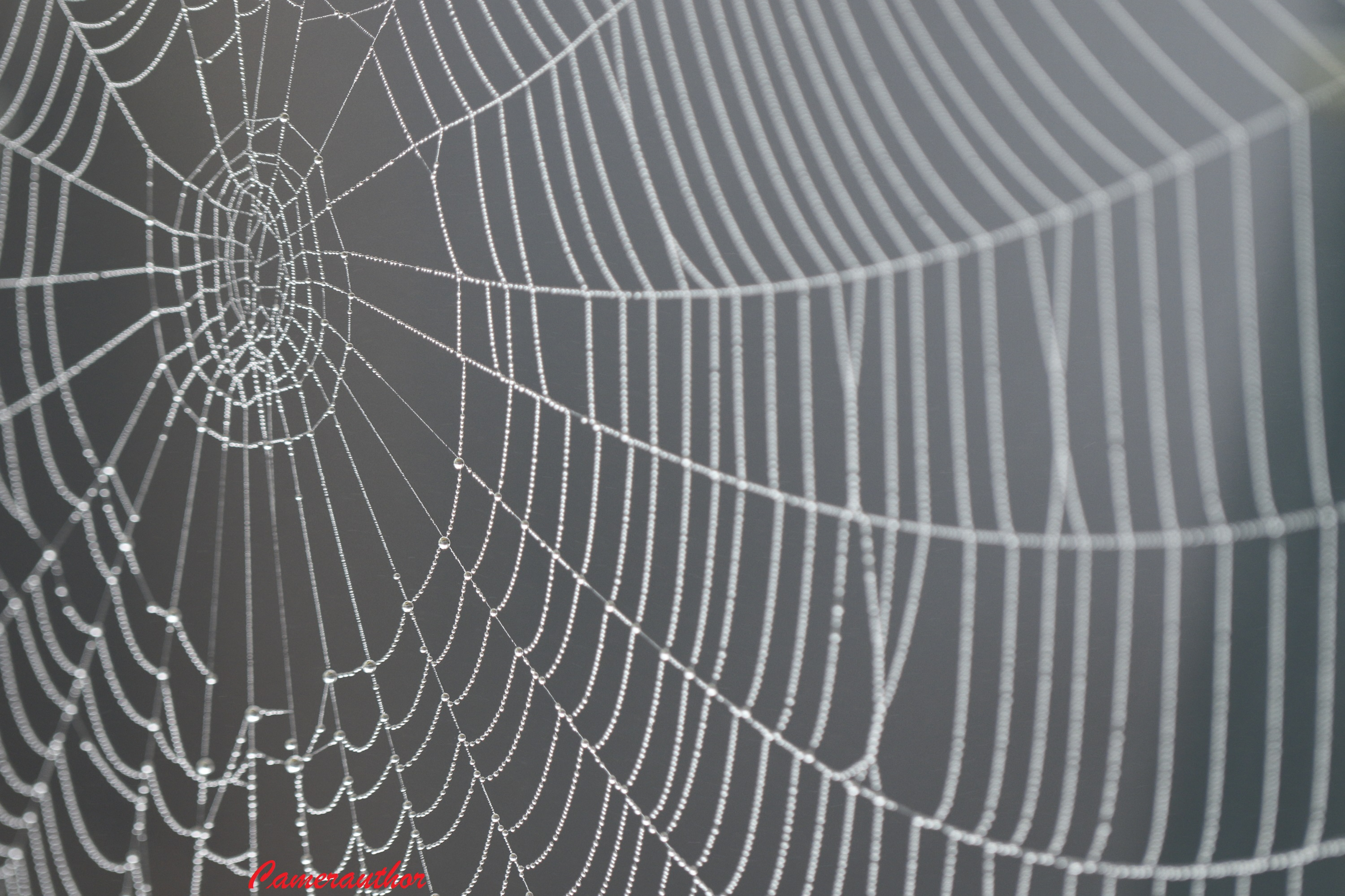blog photo 169 spider web