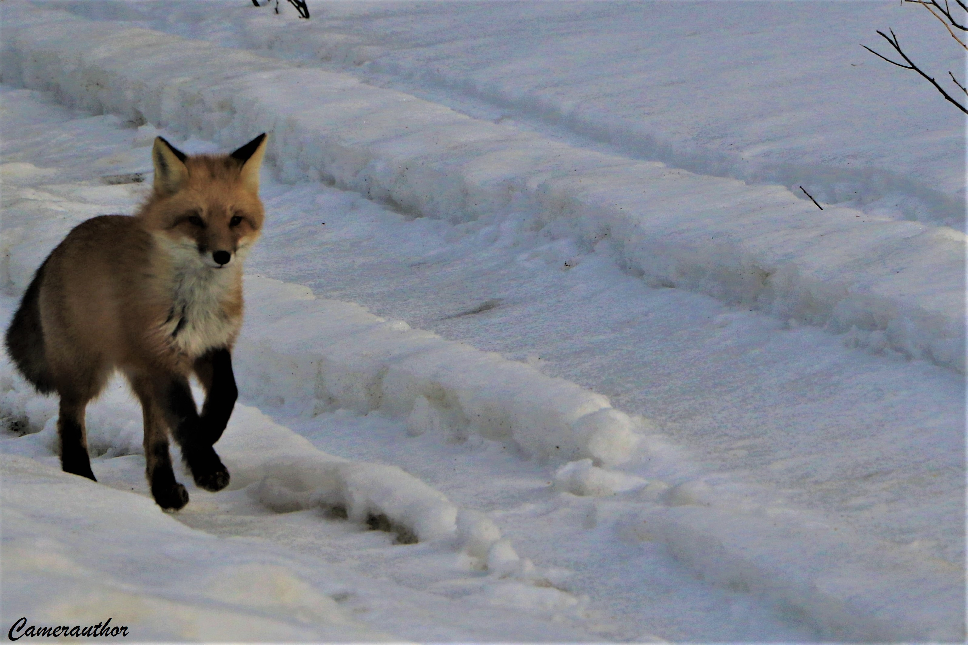 blog photo 170 fox