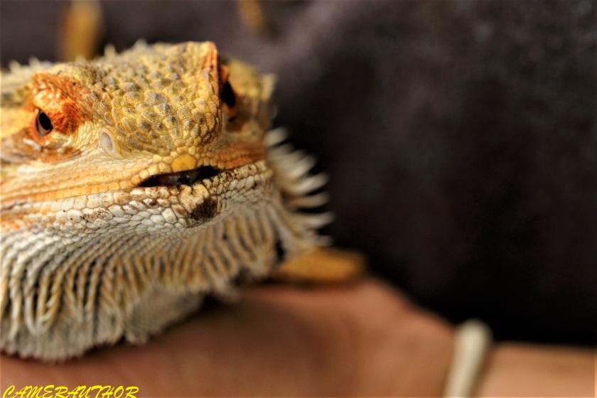 blog photo 172 dragon