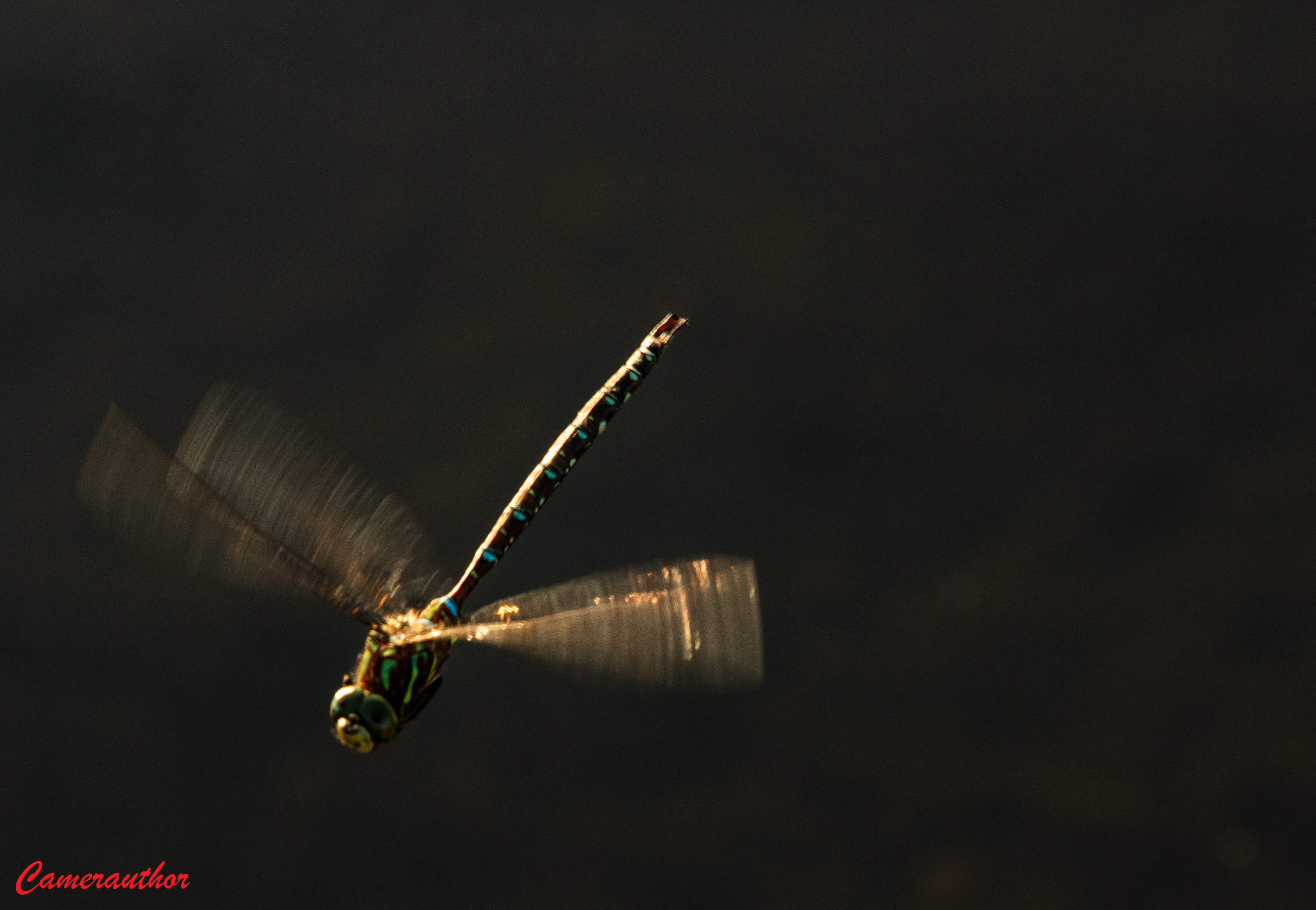 blog photo 203 dragonfly